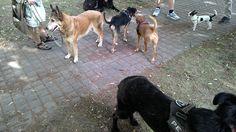 18/06/2015 - Torino con Luna, Elvis, Iride, Pepito e Peja