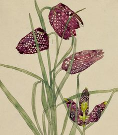 stilllifequickheart:    Charles Rennie Mackintosh  Fritillaria  1915    A lovely Macintosh