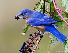 Photo Gallery: Backyard Bird Images