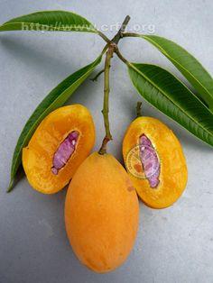 Maprang fruit photo by Oscar Jaitt
