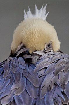 Galeria Animal: 20 fotos | Champanhe com Torresmo by Cláudia Boechat