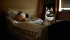 Mysterious Cat Predicts Death ... must watch video http://themetapicture.com/ever-heard-about/