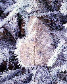 Hoar Frost on autumn's fallen leaves
