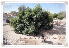 November Orchard Tasks