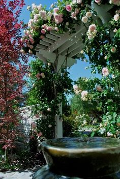 Rose arbor over a fountain