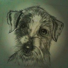 Dog...graphites