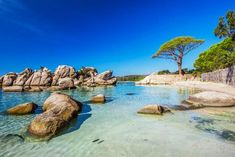 Photo about Famous pine tree on Palombaggia beach with azure clear water and sandy beach on the south part of Corsica, France. Image of france, mediterranean, palombaggia - 79263364 Best Vacation Destinations, Best Family Vacations, Images Of France, Corsica, Bora Bora, France Travel, Beautiful Islands, Beach Photos, Skiathos