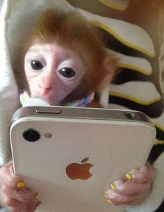 Small Monkey, Cute Baby Monkey, Pet Monkey, Cute Memes, Stupid Funny Memes, Haha Funny, Cute Funny Animals, Cute Baby Animals, Human Babies