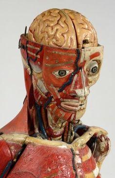 Louis Auzoux  (1797-1880 http://www.pinterest.com/pin/287386019943685379/) anatomical model.