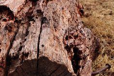 Close up nature photograph taken of a fallen tree stump on a farm.  #background #nature #log #wood #brown #grass #wallpaper #farm #landscape #tree #nailinwood #dry #stump #treestump