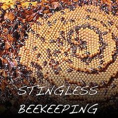 Urban Stingless Beehive: harvesting and splitting « Milkwood: homesteading skills for city & country