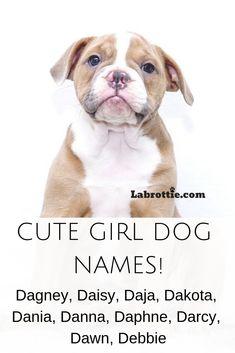 Dogs Pitbull Wallpaper 60 New Ideas #dogs | Doggie Dresses