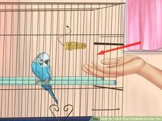 Teach Your Parakeet to Love You.