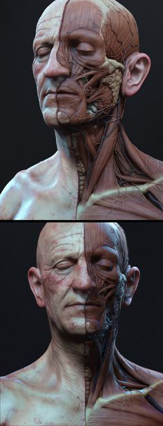Anatomy Drawing Anatomía cabeza Más - This is just an update on my previous un-textured version. This was rendered in Zbrush and the comp was done in photoshop. Facial Anatomy, Head Anatomy, Anatomy Poses, Anatomy Study, Body Anatomy, Anatomy Drawing, Anatomy Art, Anatomy Reference, Face Muscles Anatomy