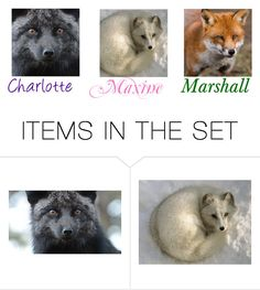 """Charlotte,Maxine and Marshall (Pet foxes)"" by maxinehearts ❤ liked on Polyvore featuring art"