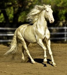 www.thewarmbloodhorse.com In the book, Shadowfax is described as being silver colored. The movie didn't quite live up to my hopes for what a silver-colored horse might look like. Finally, I found a picture of a horse that looks silvery and beautiful enough to invoke the idea of Shadowfax.
