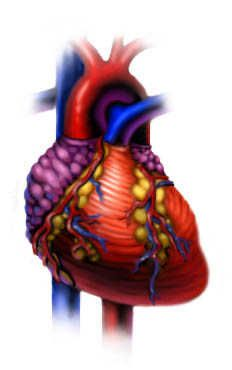 Watch animations of how your heart works (scroll down for more links)