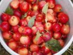 Crab apple jelly!  http://charlecoteparknt.wordpress.com/2013/10/15/mrs-hortons-recipes-8-crab-apple-jelly/