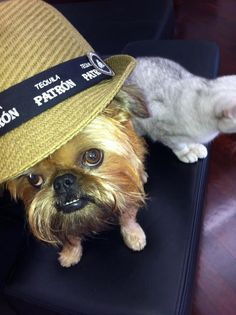 Take me to Mexico...I'm ready for my pawgarita!