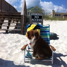 Another beach pic, from the adventures of Sheba, the Smiling Aussie.