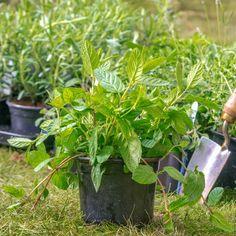 Praktyczny Ogrodnik: przełom czerwca i lipca Herbs, Plants, Herb, Plant, Planets, Medicinal Plants