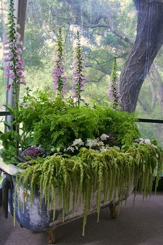 Fox gloves(digitalis) maidenhair fern, lettuce, double impatiens maybe a white begonia im unsure and lastly amaranths enjoy part sun/part shade