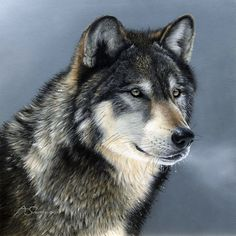 """WOLF Head called """"Cold Stare"""" on 16 inch square fabric panel. Actual Picture is approx x 10 inches on white background. Beautiful Creatures, Animals Beautiful, Malamute, Baby Animal Drawings, Timber Wolf, Wolf Love, Wolf Pictures, Wild Wolf, Beautiful Wolves"""