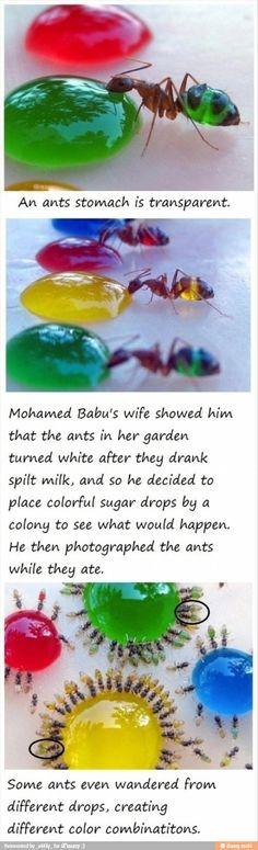 No way! I soooooo want to try this with the kiddos!