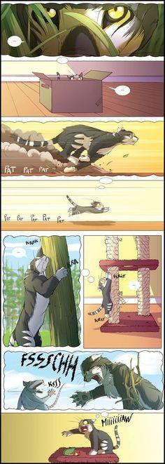 Como Funciona a Mente De Um Gato
