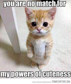 black eyed baby kitten white orange  puss-n-boots