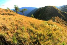 Wee Steps to Mountain Goathood Philippines, Mountains, Nature, Travel, Naturaleza, Viajes, Destinations, Traveling, Trips