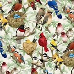 Fabric Birds Allover Coordinate On Cotton By The 1/4 Yard Elizabeth Bin