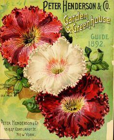 Peter Henderson & Co. Garden & Greenhouse Guide, 1892
