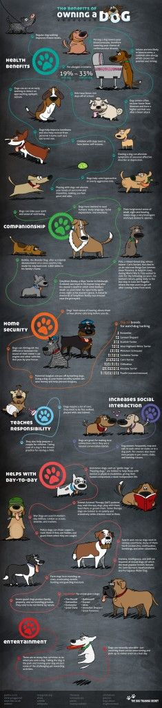 Pet Infographic on The Benefits of Owning A Dog