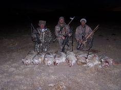 Tips & Tactics Predator Hunting, Coyote Hunting, Hunting Tips, Coyotes, Wolf, Southern, Guns, Fish, Animals