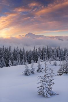 Beautiful Nature — sundxwn: *** by Oleksandr Kotenko