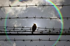 A bird is perched on barbed wire that surrounds the Jilava prison near Bucharest February 28, 2013.