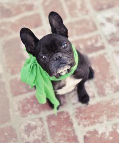 dear lord i need a pup