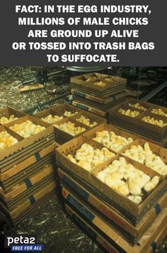 21 Things the Egg Industry Doesn't Want You to See   @officialpeta #vegan