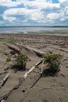 Tanto el río como el mar arrojan sobre la playa del delta sedimentos y restos vegetales