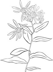 Echinacea purpurea or Purple coneflower coloring page Super coloring - free printable coloring pages for kids, coloring sheets, free colour. Flower Sketches, Flower Drawings, Pen And Wash, Body Adornment, Doodle Patterns, Printable Crafts, Free Printable Coloring Pages, Pictures To Draw, Art Images