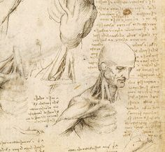 73. Sheet of Studies, c.1510-11, Pen and ink with wash, over black chalk, 29.2 x 19.8 cm