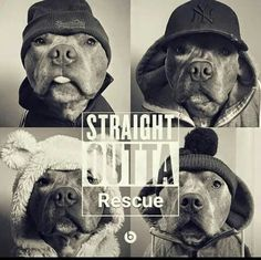 This Pit bull is just too cute:heart: