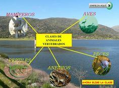 Los animales vertebrados. Clases