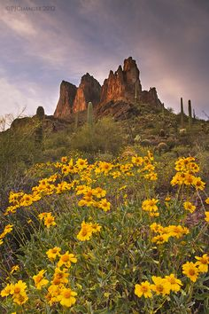 Superstition Mountains  with some spring blooms of brittlebush, Arizona.