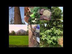Medicinal Rice B4 Formulations for Uterus Displacement: Pankaj Oudhia's ...