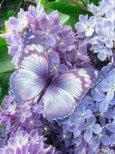 Butterfly in the purple