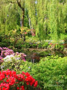Secret Garden Pond Photograph  - Secret Garden Pond Fine Art Print