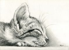 sleeping Kitten by art-it-art.devian… on Bleistift Zeic… sleeping kitten by art-it-art.devian … on … graphite, pencil drawing on 200 grams of artist paper … Tiger Kitten … original Pencil drawing … Size: 18 x 25 cm – 7 x 10 inches Animal Drawings, Cool Drawings, Drawing Sketches, Drawing Ideas, Cat Sketch, Sketching, Drawings Of Cats, Pencil Drawing Inspiration, Art It