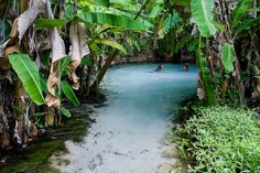 If I lived in a tropical place, I would want my pool to look like this. Gaia, Places To Travel, Places To See, Travel Destinations, Secret Places, Adventure Travel, Adventure Time, Beautiful Places, Amazing Places